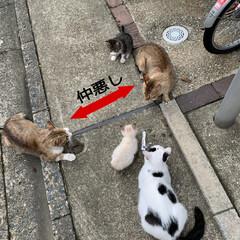 猫 猫図鑑🐈 仔猫達もだいぶ懐いてきて自分か…(3枚目)