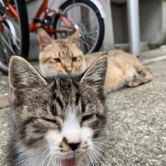 猫 猫図鑑🐈 仔猫達もだいぶ懐いてきて自分か…(1枚目)
