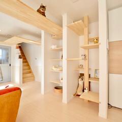カフェ風/猫のためのお家/ペット/インテリア/住まい/建築 キャットウォーク、キャットタワー、キャッ…