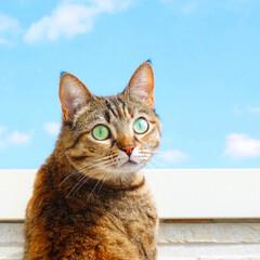 ミラーレス一眼/空/猫/ペット 今日は天気が良くてお出かけ日和ですね。