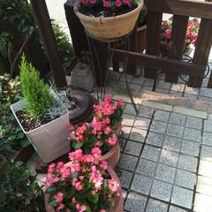 グリーン #庭   #夏の花(1枚目)