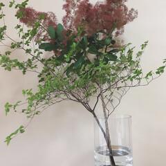 フラワーベース/花のある暮らし/ディスプレイ/花瓶/玄関インテリア/玄関/... ガラスと木を組み合わせたデザイン性の高い…(3枚目)