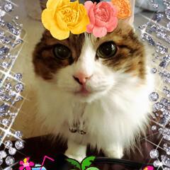 夏/たまにはペットもオシャレに 我が家の愛猫🐈です! 癒されるてますぅ