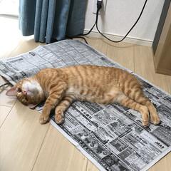 新聞紙/ペット 読めるものなら読んでみにゃさい! ねこの…