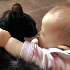赤ちゃん/子供/ペット いつも赤ちゃんの相手をしてくれる優しい子…