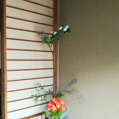 お花/いけばな/インテリア/玄関 玄関の花が変わってました☺️