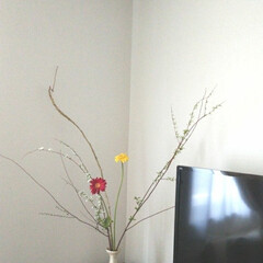 いけばな/お花を飾る/住まい/掃除