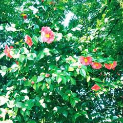 京都/お花/お花見