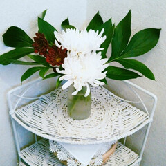 生花 白い菊に芍薬の葉