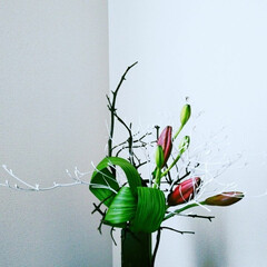 生花 頂いたユリで部屋を飾りました🎵🎶