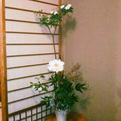 玄関/お花 フラワー/いけばな/グリーン 実家に帰ると玄関に芍薬  母がお花をいけ…