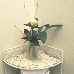 お花 フラワー/トイレ トイレに飾った芍薬  早く咲かないかな💓…