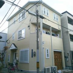 外壁塗装/明るい外壁/レモン色の家/弾性シリコン塗装 せっかく家を塗り替えるならちょっと冒険し…
