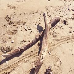 流木 流木を拾いに海へ\( ˙▿˙ )/