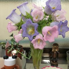 お花 ピンク色と紫色を見つけました(*^o^*…