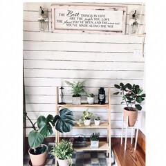 観葉植物/輸入壁紙/インテリア/スカンジナビアン/boho/海外インテリア/... 玄関に観葉植物を置いてます。 植物棚やフ…