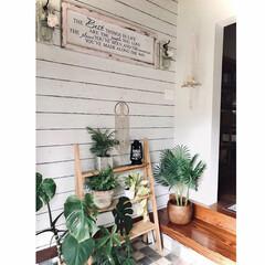 メイソンジャーライトdiy/メッセージボードDIY/植物棚diy/セルフリノベ/ガーデニング/花のある暮らし/... 室内ガーデニングは玄関のDIYした棚へコ…(2枚目)