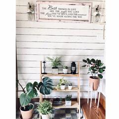 メイソンジャーライトdiy/メッセージボードDIY/植物棚diy/セルフリノベ/ガーデニング/花のある暮らし/... 室内ガーデニングは玄関のDIYした棚へコ…(1枚目)