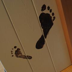 子育て/育児/成長のしるし/絵本棚/子どもの成長 絵本棚を購入したときに子どもたちの足型を…
