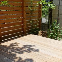 「野点のできる庭の内部のご紹介。 野点は季…」(1枚目)