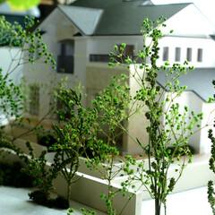 デザイン/外構/庭/建築模型/建築/DIY/... 建築模型を作ってみました! 植栽のイメー…(1枚目)