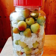 旬の食材/梅シロップ/梅しごと/キッチン/暮らし 今年も梅シロップを仕込みました! 氷砂糖…