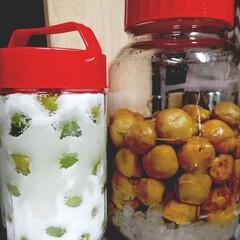 保存版/梅シロップ作り/梅しごと/キッチン/暮らし 梅しごと、第2弾です。 小さな瓶なので氷…