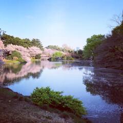 桜/おでかけ/日本庭園/春/新宿御苑 都会のオアシス新宿御苑