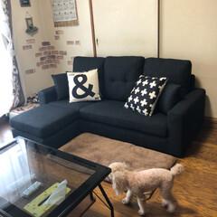 ソファー/インテリア/ソファ 新しいソファーが、我が家に❣️ 2通りの…