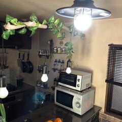 ムック/熱帯魚のベタ/天井照明/ペット/犬 我が家の天井照明達 リビングはアイアン調…(2枚目)