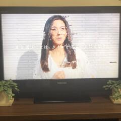 愛犬/ムック/エラー/テレビ不具合/東芝レグザ32A1S液晶テレビ こんにちは😁本日は晴天なり☀️   しか…(2枚目)