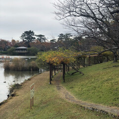 落ち葉/紅葉/ムック/散歩/大池公園 家から🚗で5分くらいで行ける、大池公園🍁…
