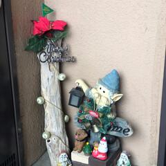 浅漬け/ふりかけ/玄関/クリスマス/点滅ワイヤーライト またまた、キャンディポットクリスマスに変…(3枚目)