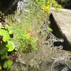 グリーン 自然の恵み 天然水 澄み渡る空気の中で心…