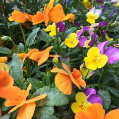 花壇/プランター/ガーデニング/花 初夏を思わせる空の下そよ風に吹かれて揺れ…