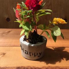 グリーン/花/フラワー/バンドメイド/DIY/花壇/... 花ポッドを作ってみました。 ハッピーなケ…