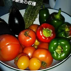 畑の野菜/住まい/暮らし 先日、収穫しました。 寒空の下。  これ…