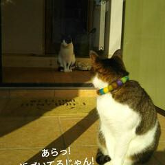 お迎え/夕方/はちわれ/きじとら白/にゃんこ同好会 仕事から帰って 玄関のドア開けっぱなしで…(3枚目)