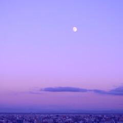 札幌/街並み/月/北海道/風景/旅 札幌の旭山記念公園からの街並みと月。幻想…