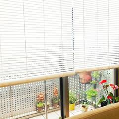 アカリナ/あかりラボ/ブラインド/カーテン/新生活/賃貸/... 賃貸もOK!自然光でお部屋を明るくする不…(1枚目)