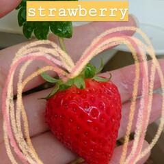 イチゴ栽培/いちご/イチゴ/家庭菜園/ベランダ菜園/ベランダ園芸/... 栽培2年目のイチゴちゃんです*°  ベラ…