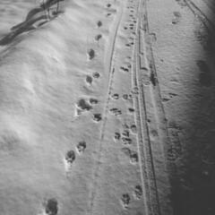 散歩/道/暮らし みんな(🐕)の散歩コース🤭
