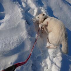散歩/暮らし おはよーございます🎵 寒いです🥶  犬だ…