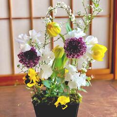 小さい春 春のお花をたくさん詰め込んだ、お花畑!5…