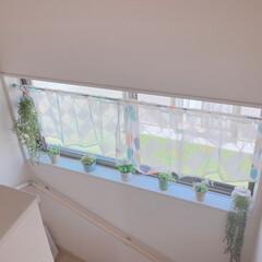 ブリキ鉢/フェイクグリーンゾーン/窓辺インテリア/階段/ダイソー/セリア/... フェイクグリーン追加しました🍀  階段も…(1枚目)