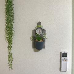 カッティングボード/温度計/壁面/フェイクグリーン/グリーン/DIY/... ここにぉさまりました(⸝⸝˃̶͈ ૢ ૢ…