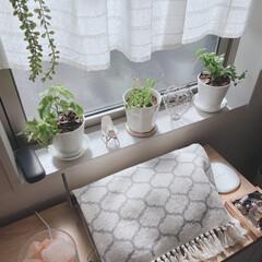 リビング/IKEA/キャンドゥ/ニトリ/ダイソー/セリア/... リビング♡ジャングル化計画…進行中🍀  …(3枚目)