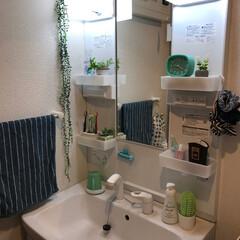 サボテン/フェイクグリーン/ペパーミントグリーン/洗面所/グリーン/雑貨/... 🍀☘我が家の洗面所🍀☘