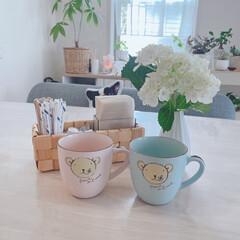 震災にも耐えたマグ/ペアマグカップ/コーヒータイム/白い花/紫陽花/リビング/... 今朝ゎ紫陽花とコーヒータイム☕️(1枚目)
