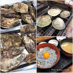 シラス丼/ホタテ/牡蠣/フード/グルメ 牡蠣小屋にいってきましたぁ🐬 生牡蠣も好…